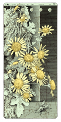 1d/Blumen 4